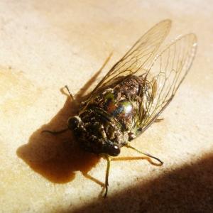 Eine mega Fliege auf unserer Terrasse.